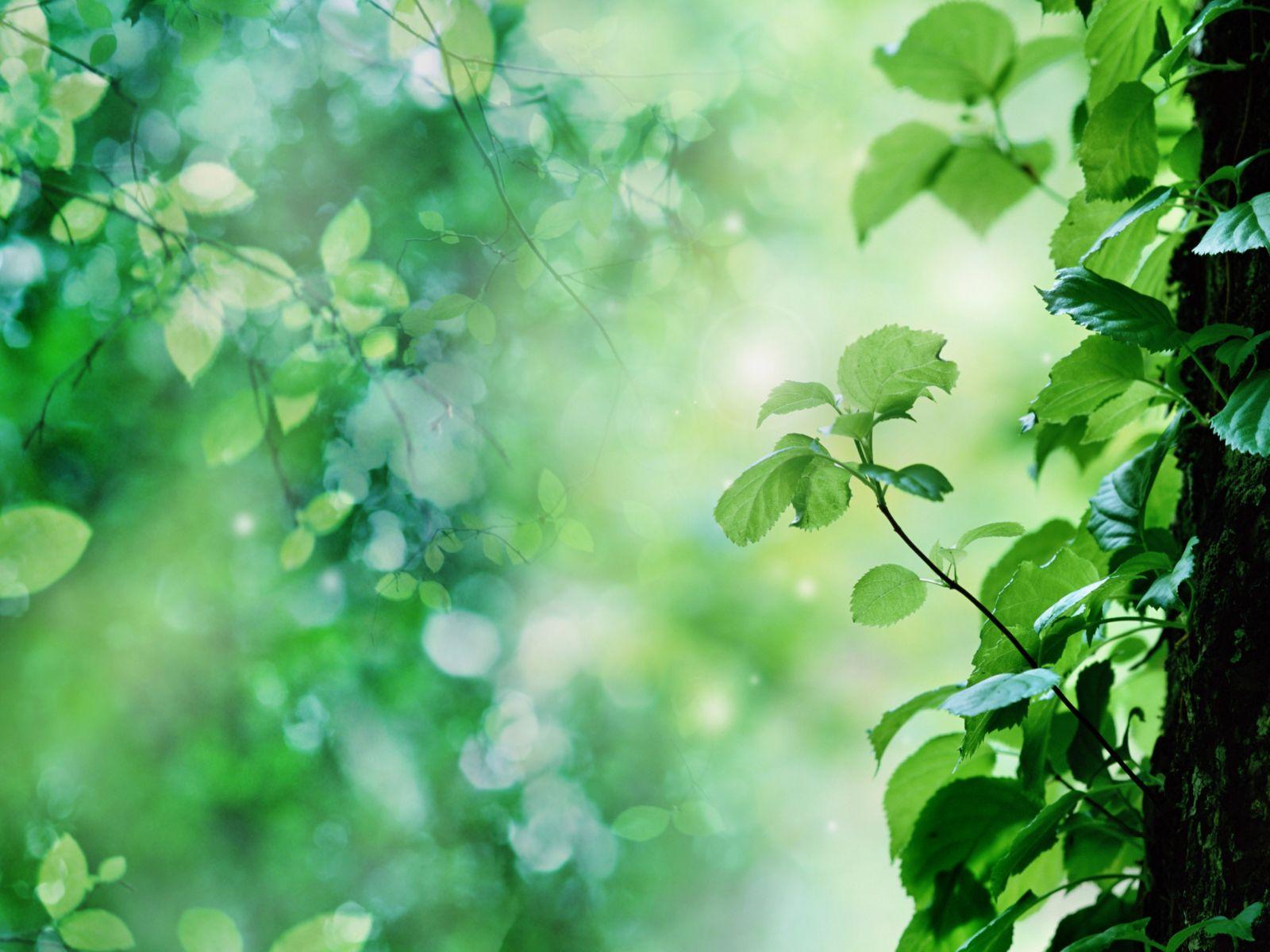 Limpieza de origen verde